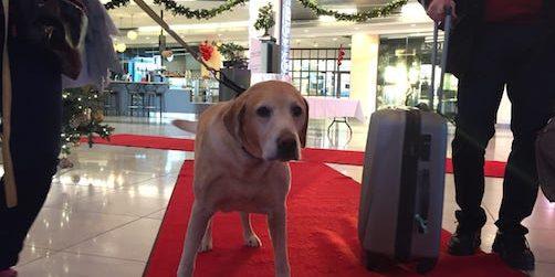 rekord: 370 hundar checkar in på arlandahotell