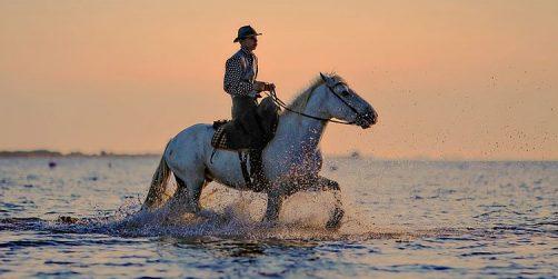 destination storsatsar på hästturism