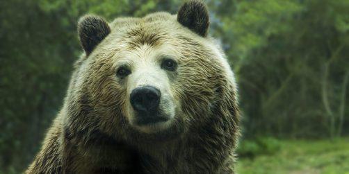 för företaget som gjort allt – nu kan ni bo i ett björnide