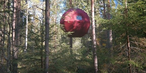 campa i trädtopparna