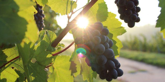 8 vingårdar till ditt nästa företagsevent
